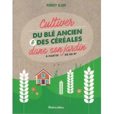 Cultiver du blé ancien & des céréales  dans son jardin